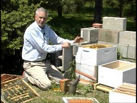 Splitting Hives Part 1