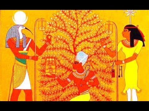 العرب اليوم - شاهد: حكاية شجرة الكريسماس أسطورة قبل