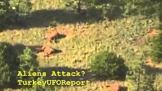 Las Vegas (NM) United States  city pictures gallery : ALIEN ATTACK? LAS VEGAS/NEW MEXICO/USA-SUSPECT ANIMAL DEATHS