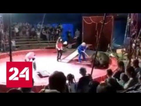 18 июня на цирковом представлении в Волгоградской области на дрессировщика набросился медведь. 19 июня...