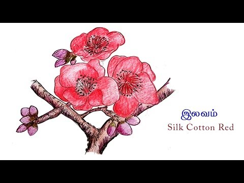 Silk Cotton Red Flower Drawing | How to Draw Flowers