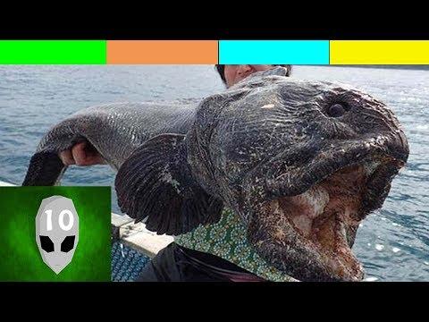 Con Cá Đột Biến Khổng Lồ Bị Bắt  Thủy Quái Quay trên video  Cá đột biến