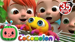 Video Itsy Bitsy Spider | +More Nursery Rhymes & Kids Songs - CoCoMelon MP3, 3GP, MP4, WEBM, AVI, FLV Maret 2019