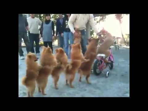 Watch Cute Videos   Funny Videos For Kids, Family, and Friends   GodTube