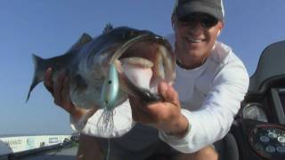 Video Lake Fork Guide Bass Fishing Report - How To Catch Big Bass w Crankbaits Jigs and Texas rigs MP3, 3GP, MP4, WEBM, AVI, FLV Januari 2019