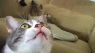 My Singing Cat - YouTube