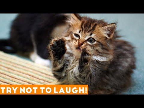 Funny animals - Try Not To Laugh Funniest Animal Compilation 2018  Funny Pet Videos