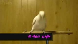 tarawga.tk.kurdish funny comedy