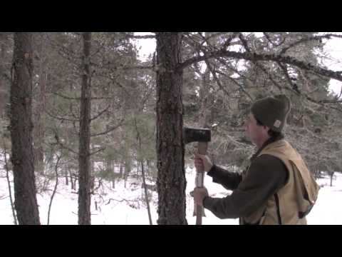 How to Recognize a Bark Beetle Infestation