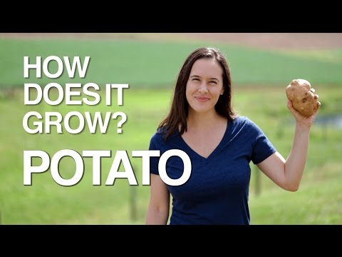 Potatoes: how much do you know about the 4th most grown crop on the planet?