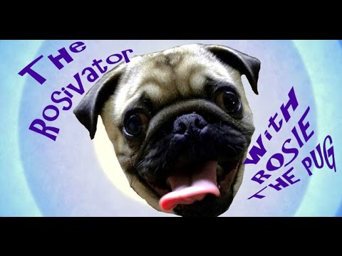 'The Rosivator' by Rosie the dancing Pug Puppy
