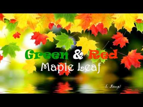 Green & Red Maple Leaf (HD1080p)