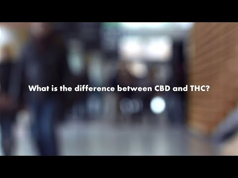 Cannabis Questions: How are THC and CBD different?