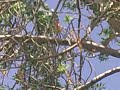 Snake climbed on tree in pishin, pakistan