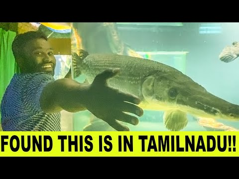 Found This In Tamilnadu | Vijay Viruz