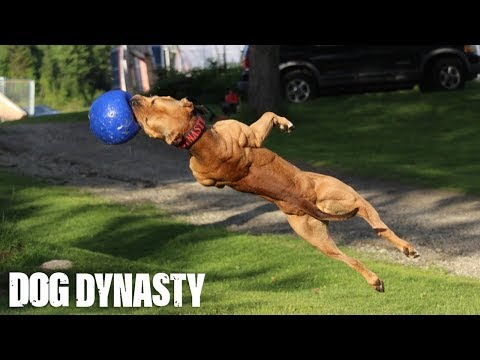 """Super"" Pit Bull: Training The Ultimate Protection Dog 