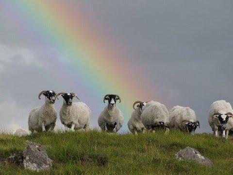 """Sonnet of Rainbows"" ( Original )"