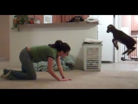 lamb - Lamb bounces after girl Subscribe!: http://dft.ba/-camelsandfriends To use this video in a commercial player, advertising or in broadcasts, please email Vira...