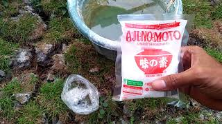 Video manfaat ajinomoto dan garam menyuburkan tanaman MP3, 3GP, MP4, WEBM, AVI, FLV Desember 2018