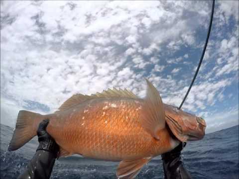 Spearfishing, Pesca sub Caranha 11 kg , capturada em Pontal do Peba-Al, dia 23/12/2015