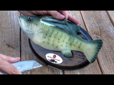 Cutting open a big mouth billy bass singing fish to find for Big mouth billy bass singing fish