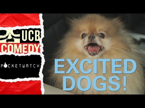 dogs at the holidays - These dogs haven't seen their companions for months! When they finally reunite, it's explosive! Subscribe: http://www.youtube.com/ucbcomedy Check out more vi...
