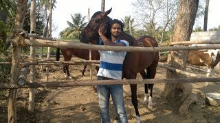 Thrissur India  City pictures : kerala horse riding thrissur ( india )