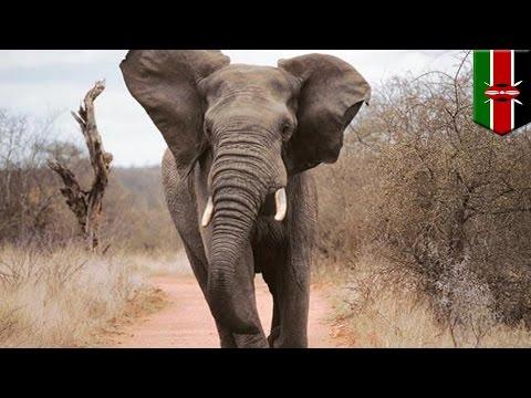 Un touriste italien se fait piétiner par un éléphant au Kenya