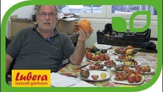 Die Vielfalt der Lubera® Tomaten