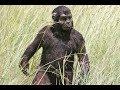 İnsanın Evrimsel Yolculuğu