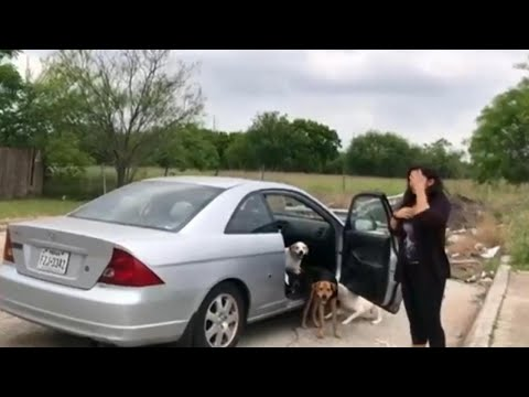Woman Abandons Dogs on Street Before Driving Off