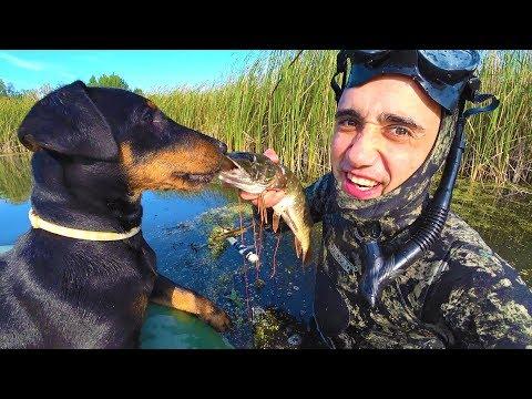 Рыбалка Подводная охота на болоте Запекаю щуку в земляной печке - DomaVideo.Ru