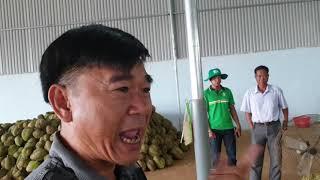 Đã có kho ở Phước An, Đắk Lắk thu mua sầu riêng sạch giá cao