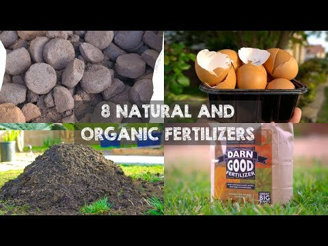 8 Natural and Organic Fertilizers to Grow Big Plants