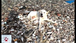 Unbelievable cruelty - they broke her legs and left her to drown by the river by The Orphan Pet