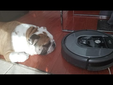 Roomba vs. Bulldog