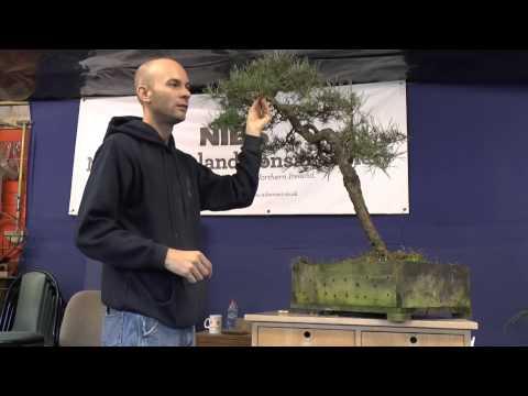 Peter Warren Workshop Sept 2013 - Stephen's Pine