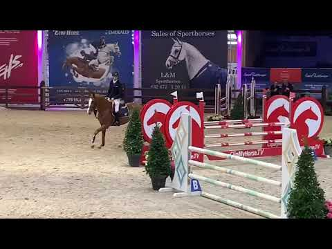 Fortune RZ clear Pavo stallion competition