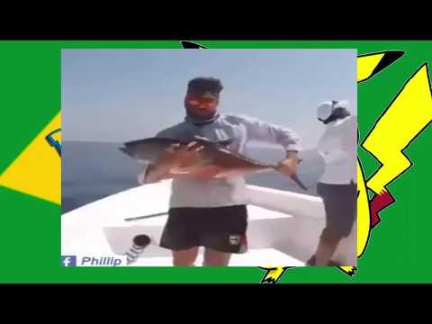 Vídeos Engraçados para Morrer de RIR   videso whatsapp 2018 agosto video agosto funny videos agosto