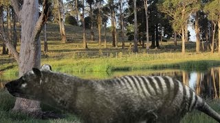 BREAKING NEWS: Tasmanian Tiger Remains Discovered in Northern Tasmania