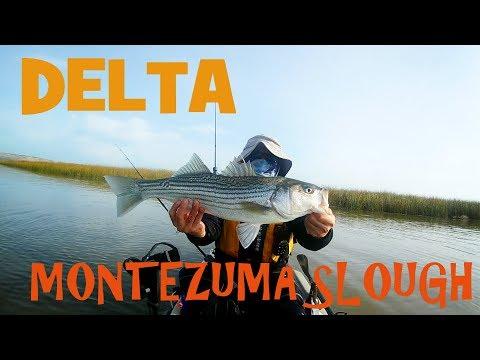 Delta Striper and Sturgeon Hunt: Montezuma Slough with NCKA members