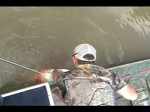 Bowfishing Missouri