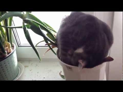 il-gatto-e-la-posizione-assurda-94