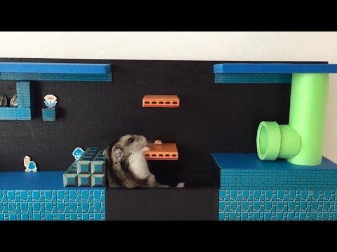 Super Mario Hamsteri läpäisee kentän – Hieenosti meni!