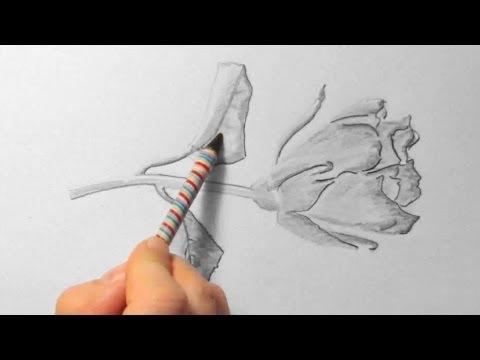 Rose, zeichnen im Zeitraffer (Rose, drawing in fast motion)[HD]