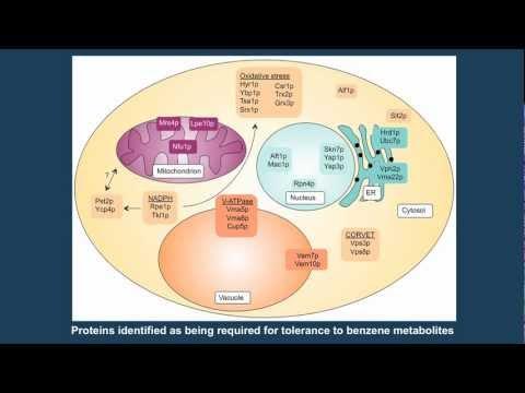 Functional Toxikogenomik: von der Hefe bis zum Menschen