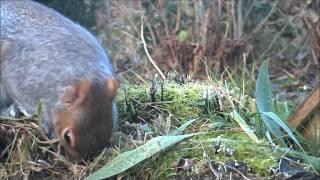 Wildlife Trail Camera - 23.12.2016