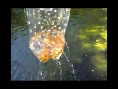 Armadilha para peixes feita de garrafa pet - Small fish trap, pet bottle.