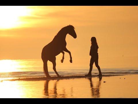 Készíts videónaplót lovadról!