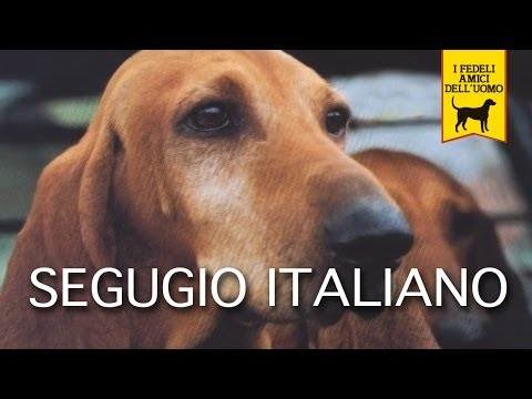 segugio italiano - trailer documentario